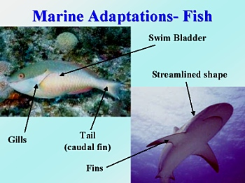 Adaptive features of aquatic plants and animals